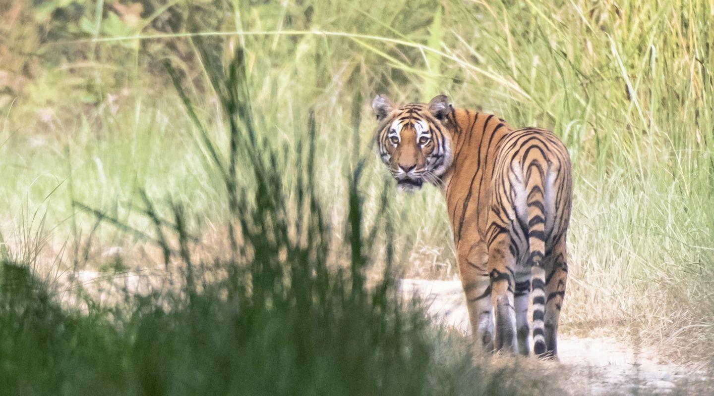 Bardia National Park Tiger Tops Karnali Nepal 3