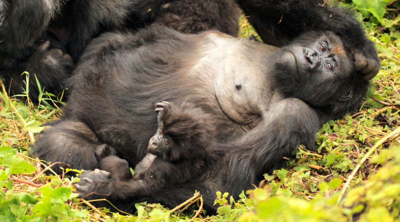 Gorilla Trekking Rwanda 3