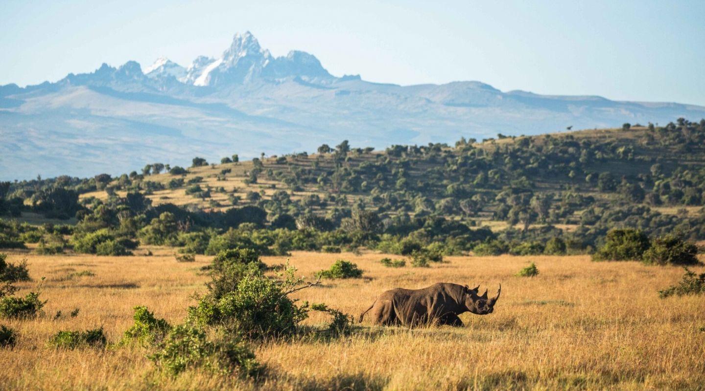 Borana rhino landscape