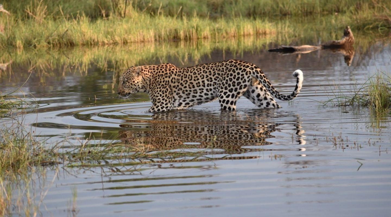 Botswana Okavango Delta 22