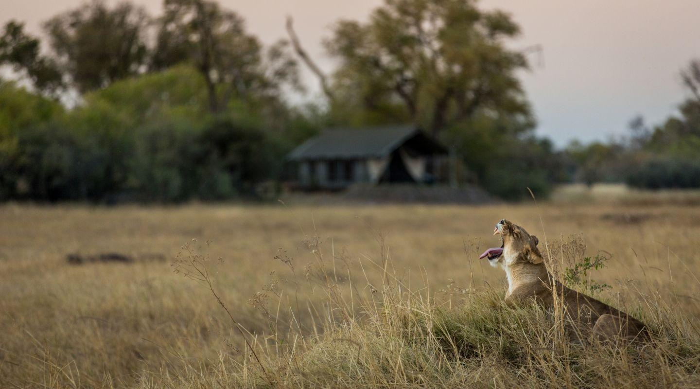 Little Machaba Okavango Delta 1