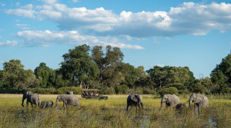 Little Vumbura game drive elephants