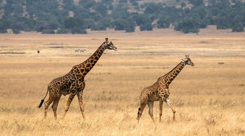 Magashi Safari Rwanda Akagera 13