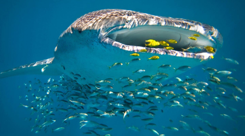 Sal Salis Ningaloo Reef Australia 18