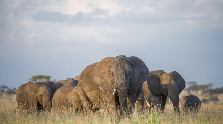 Singita Grumeti elephants
