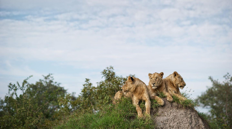 Singita Lebombo Lodge Wildlife