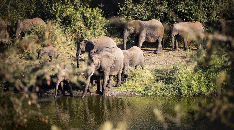 Singita Lebombo elephants