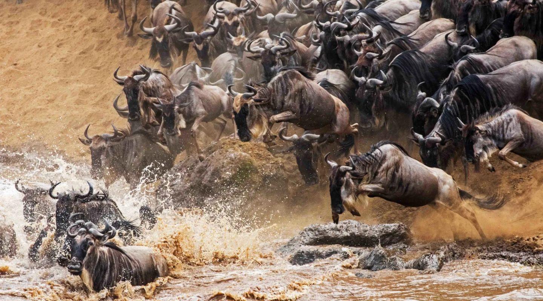 Angama mara wildebeest migration