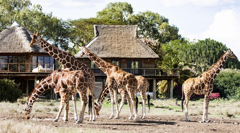 Segera giraffes hero