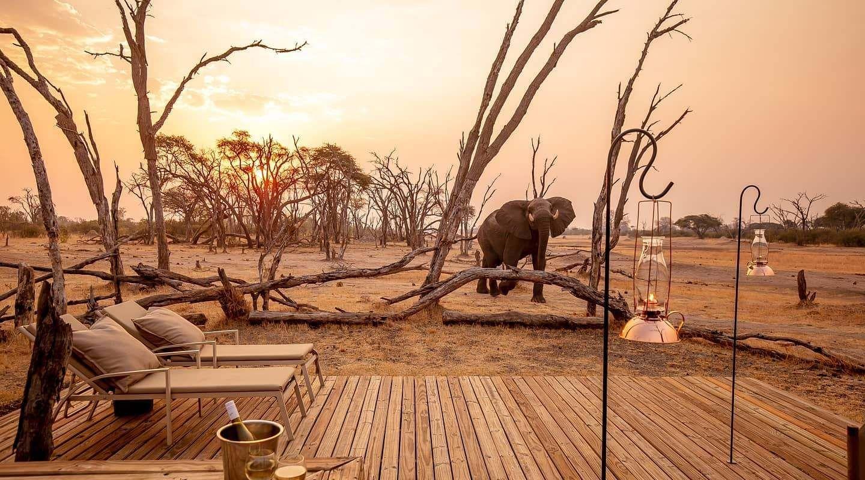 The hide hwange elephant deck
