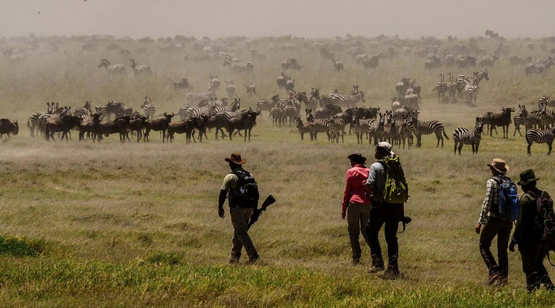 Wayo walking safari migration