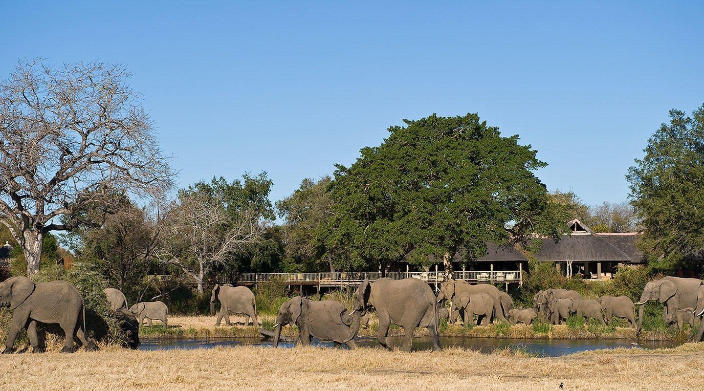 Sabi Sabi Bush Lodge Elephants at Lodge